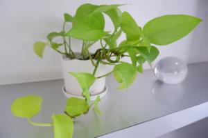 BEAM'S -HAIR- 店内観葉植物写真